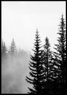 Poster, Misty tree tops