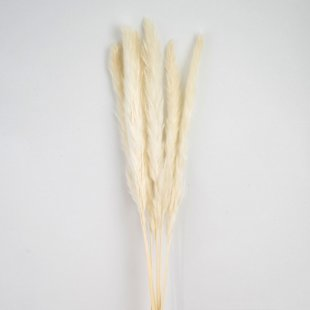 Real dried pampas grass, white 6-p