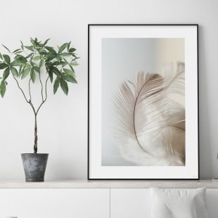 Poster, Soft feather