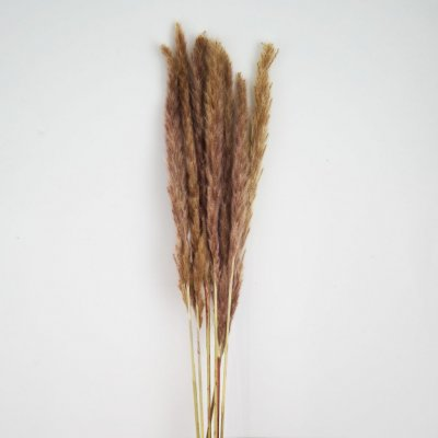 Real dried pampas grass, natural 6-p