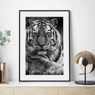 Poster, The Tiger